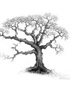 Graines de feuillus, arbres et arbustes